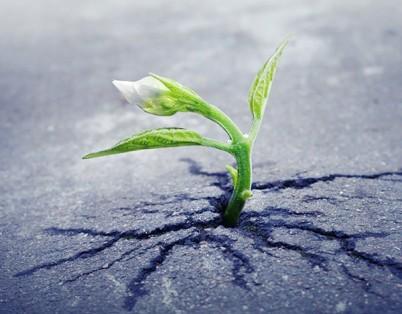 resiliencia_0_phixr